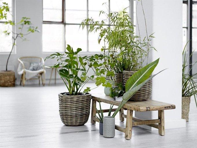 Greendesign_ADASSISTANCE50